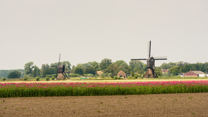 Summer landscape in the Netherlands