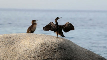Coastal with cormorants (Spain,Costa Brava)