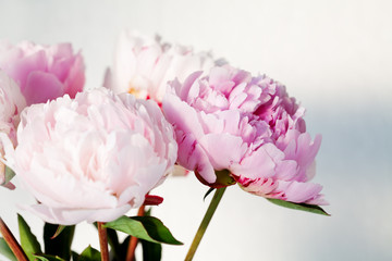 Bouquet of beautiful pink peonies