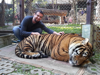 Young man cuddling live tiger