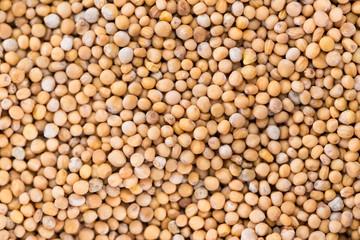 Mustard Seeds (background)