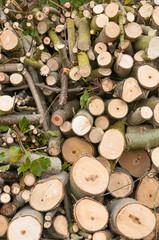 Baumschnitt, Gartenarbeit, Landschaftspflege