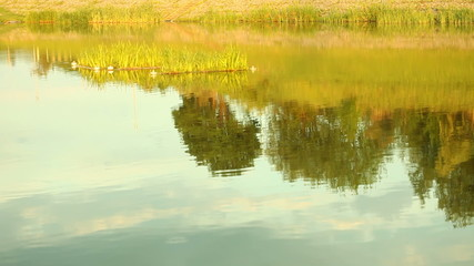 Reflection of countryside in lake water. Outdoor.