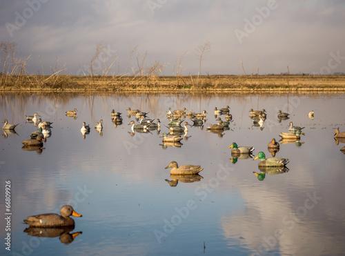 Keuken foto achterwand Jacht Duck decoys