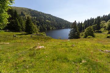 Lac, vallée et forêt en montagne