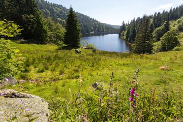 Prairie fleurie et lac en montagne