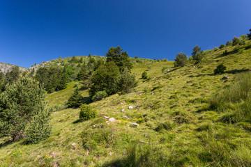 Herbe et arbres sur le versant en montagne