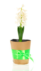 Pot with hyacinth, green bow