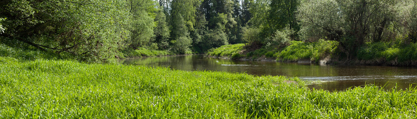 Panoramic view of river in forest