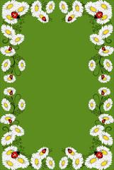 rahmen,floral,kamille,blüte,blume,sommerwiese,grün