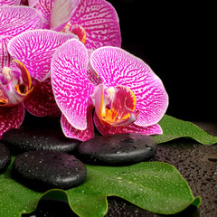 spa setting of blooming twig violet orchid (phalaenopsis) on zen
