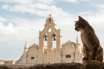 Cretan cat at famous Arkadi monastery, Crete