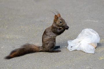 Eichhörnchen beim Frühstücken