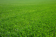 green grass - 66817551