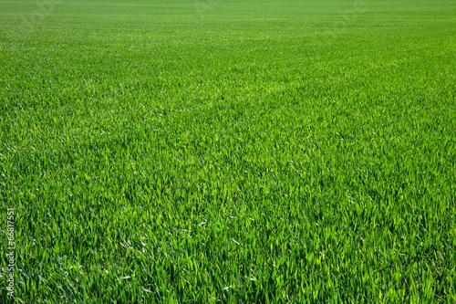 Fotobehang Weide, Moeras green grass