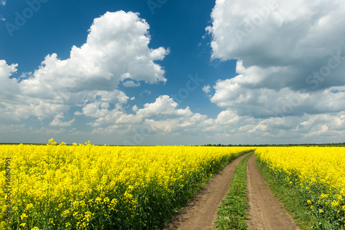 Ground road in rapeseed field