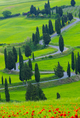 Beautiful landscape of Tuscany with  twisting road and cypresses