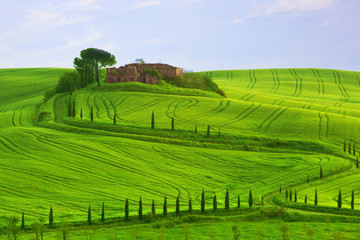 Wavy hills, cypresses and the destroyed estate , Tuscany, Italy