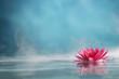 Leinwandbild Motiv water lily