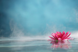 water lily - 66821761