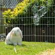 Kaninchen mit Seifenblasen