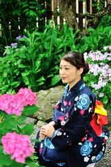 紫陽花の咲く庭に紺色の着物を着て立つ日本人の美しい女性