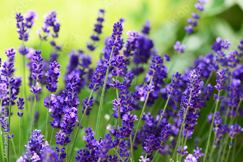 mata magnetyczna Lavendel