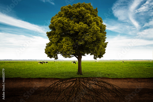 canvas print picture Tree
