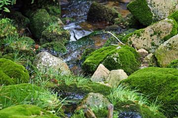 Moos auf Steinen
