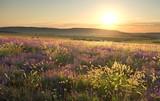 sunset on summer mountain meadow. - 66832502