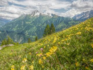 gelb blühende Bergwiese in HDR