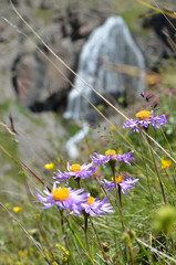Purple flowers with mountain waterfall in background