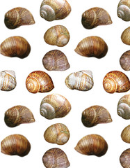 Seamless pattern of snails shells in natural colors