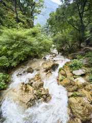 Rapid mountain river flows among green lush forest