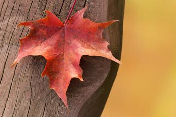 Ahornblatt auf altem Holz, plakativ, Herbstanfang