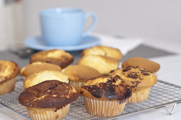 Muffins just baked are ready for the breakfast