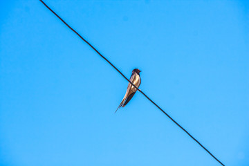 Swallow sitting on metal wire over blue sky