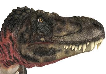 tarbosaurus head