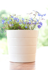 blue flowered plant in white pot