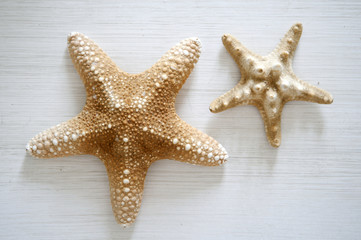 starfishes on a white wooden table