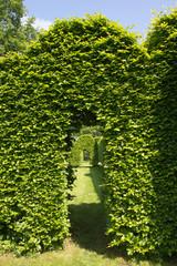 Green arch in garden