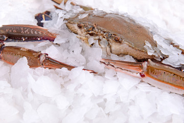 crab freeze in ice