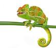 Leinwanddruck Bild - happy chameleon