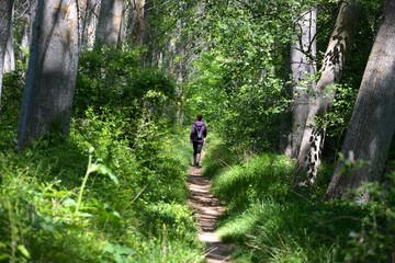 mujer caminando por un camino entre arboles en verano