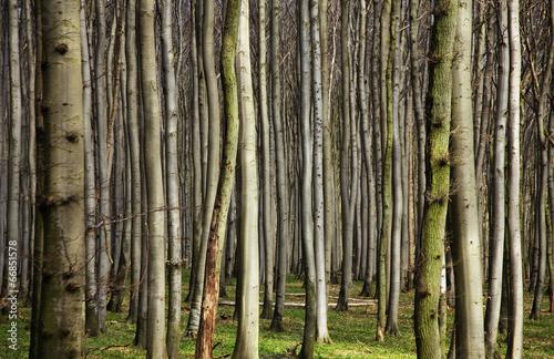 Papiers peints Forets Wald