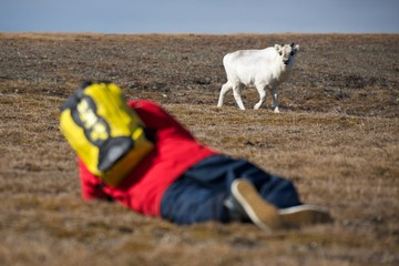 Blurred man on ground photographing young reindeer