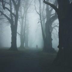 Waldspaziergang im Nebel