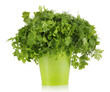 Colorful bucket with parsley and dill isolated on white