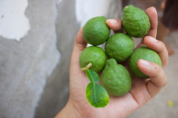 Lime in the hands of women