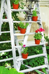 Wooden frame with flowers pots in garden